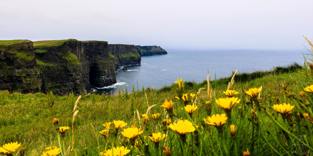 CliffsOfMoher_SpringMeadowFlowers_FACEBOOK.jpg