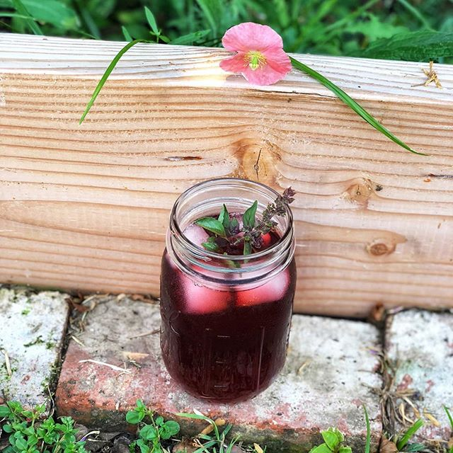 This sort of weather calls for a light hibiscus cocktail! I drank this all day Sunday while gardening. 3 parts iced hibiscus tea, 1 part Campari, 1 part simple syrup, garnished with flowering basil. 🌺 (Even the sneaky pink poppy wants some)