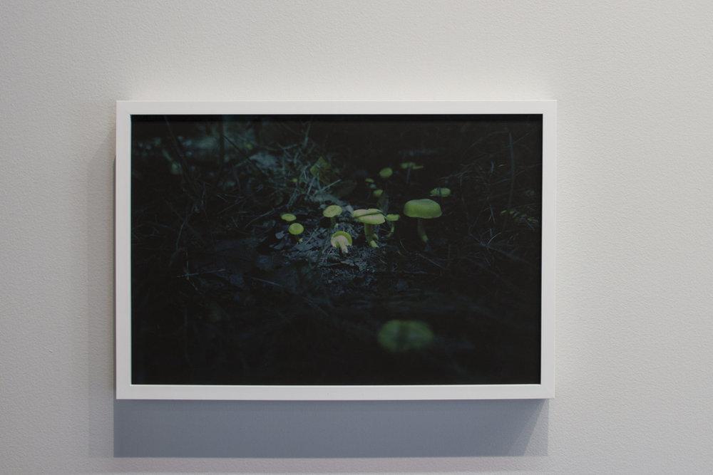 Jill's Chanterelle , 2017, pigment print