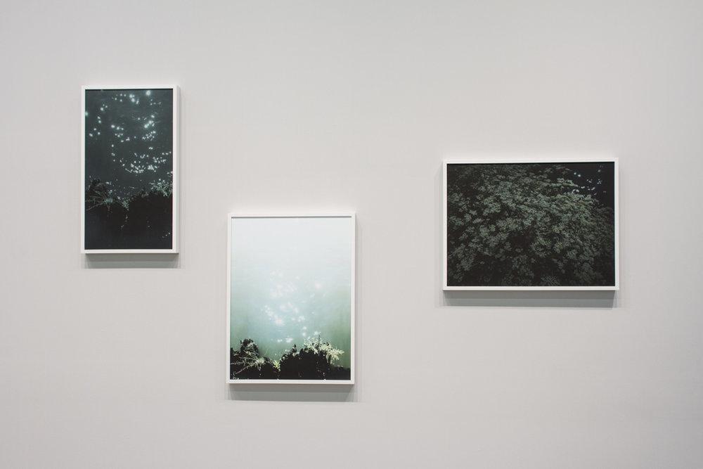 River, Night , 2016, pigment print    River, Day , 2016, pigment print  River,  Dusk , 2016, pigment print