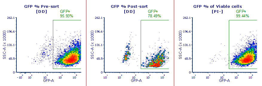 In this example the post-sort purity check showed a GFP+ fraction that appeared to be lower than the pre-sort expression. By adding a viability dye we were able to determine that the GFP- fraction were cells that had died during the sort process, and in fact the post-sort purity of viable cells was 99.4%.