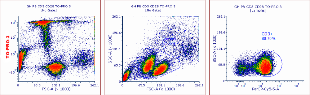 Events in this data set were only gated on classical FSC vs SSC parameters, and 2 distinct lymphocyte-like populations are seen.