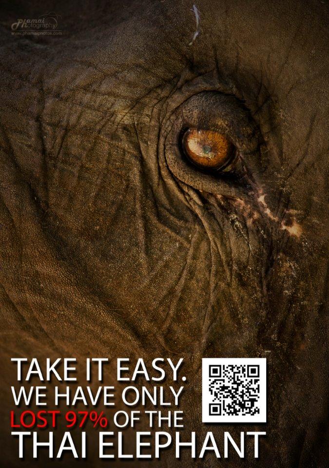 9FEB13_Elephant