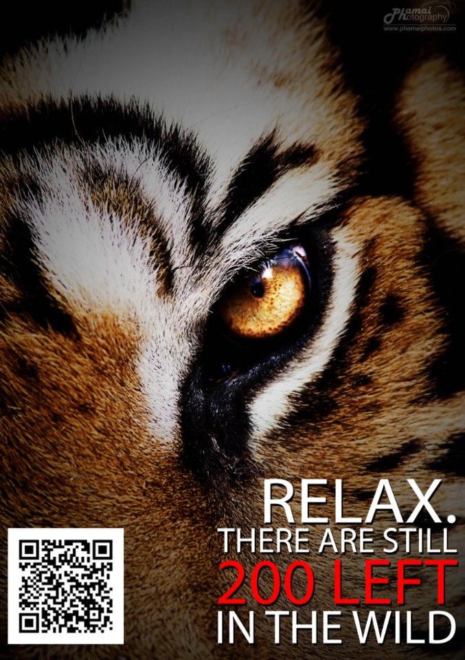 9FEB13_Tiger
