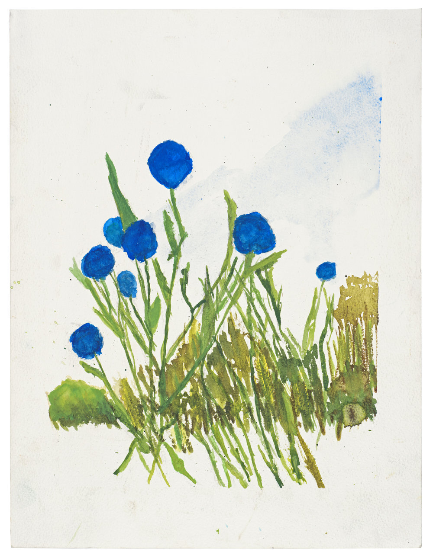 Cornflowers   Kevin Seddon  Watercolour