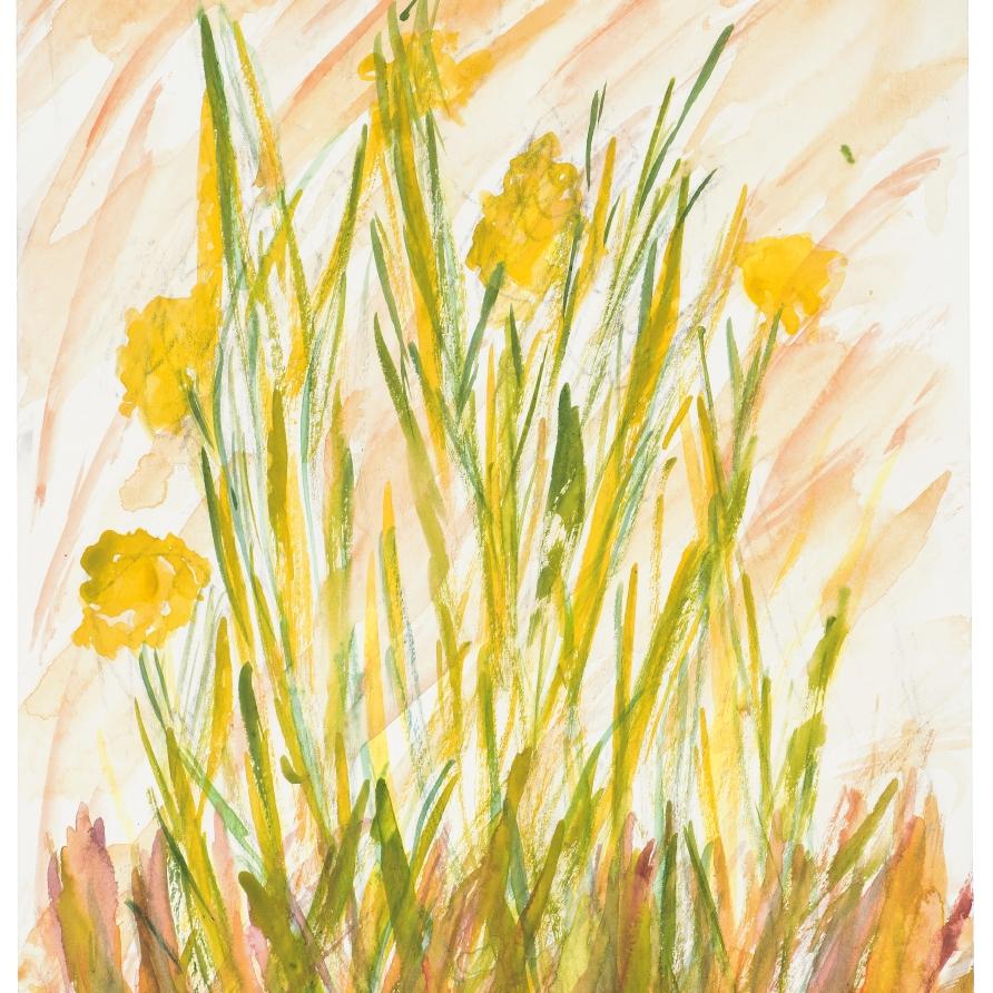 Spring Daffs   Kevin Seddon  Watercolour and crayon