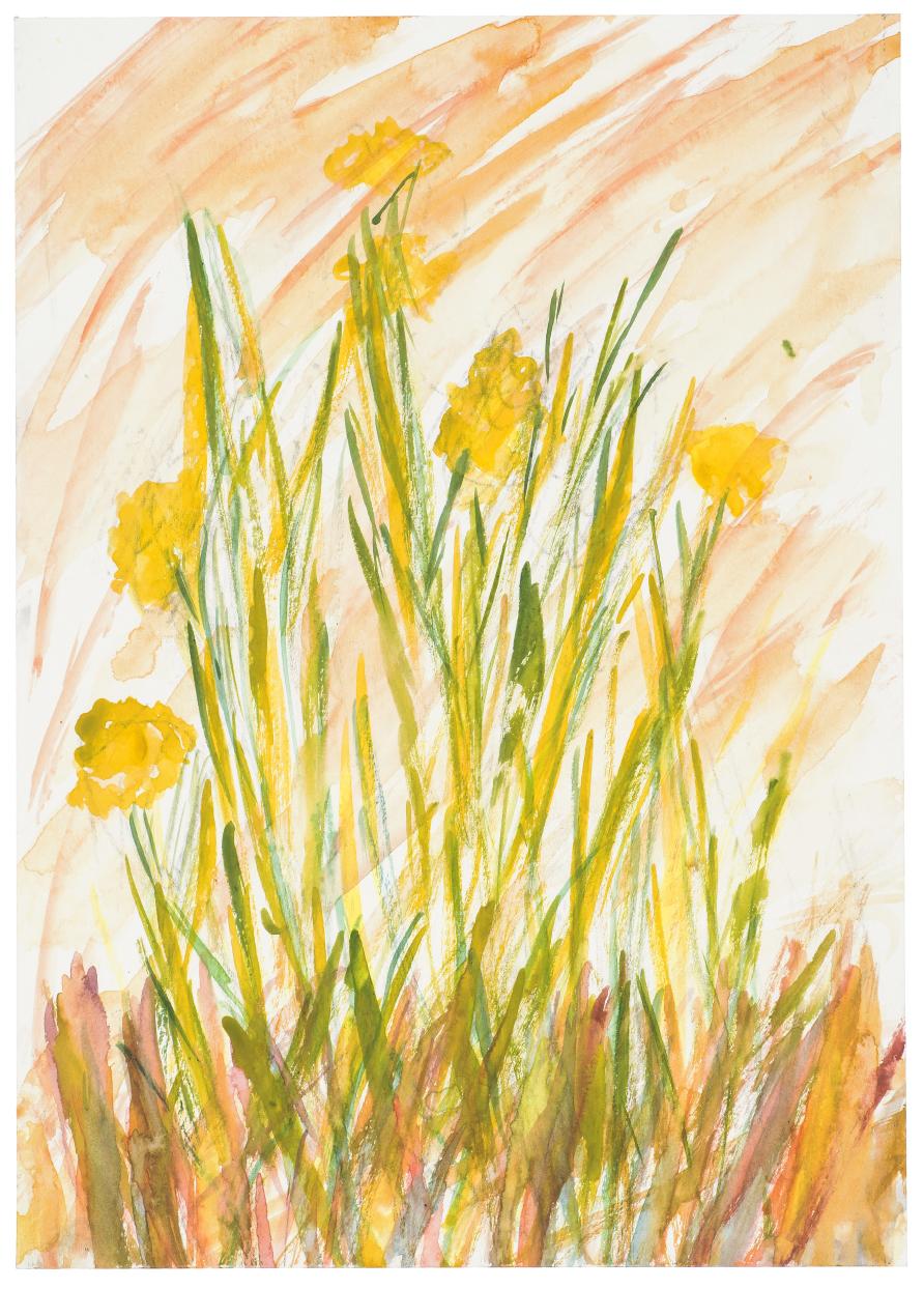 Spring Daffs by Kevin Seddon (Watercolour and crayon) £25.jpg