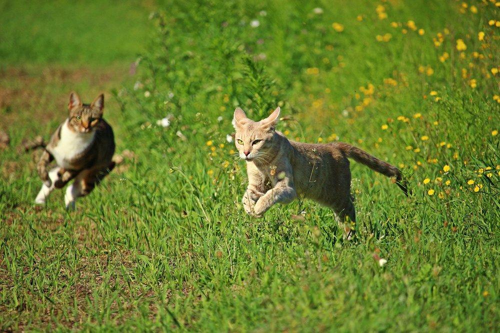 cat-2615700_1920.jpg