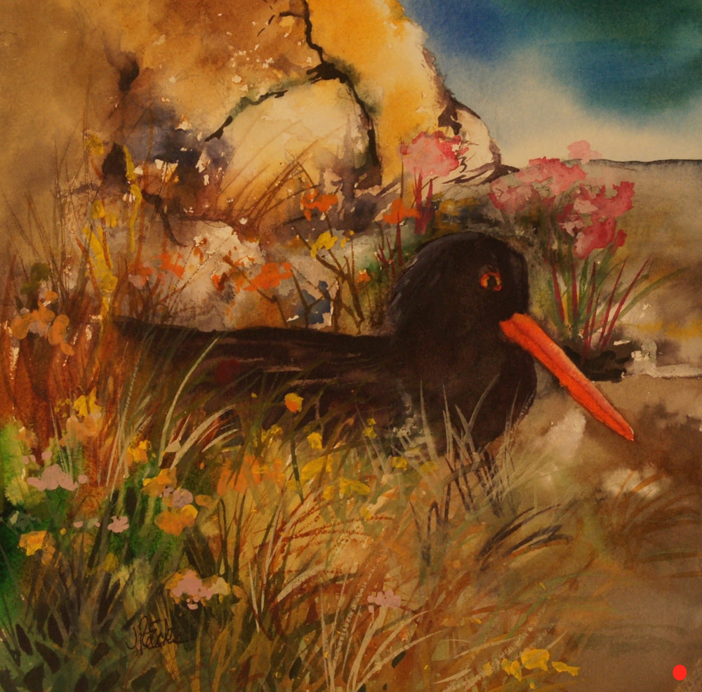Oyster Catcher On The Nest, Watercolor, 9.5Hx9.5W, SOLD