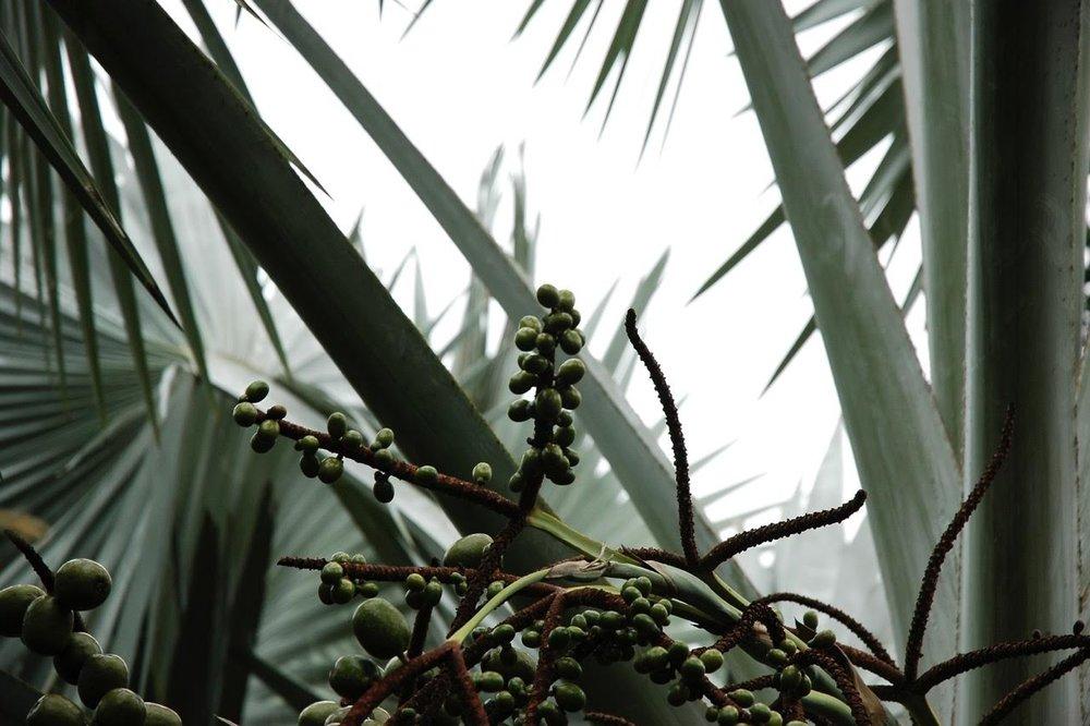 cover leaf.jpg