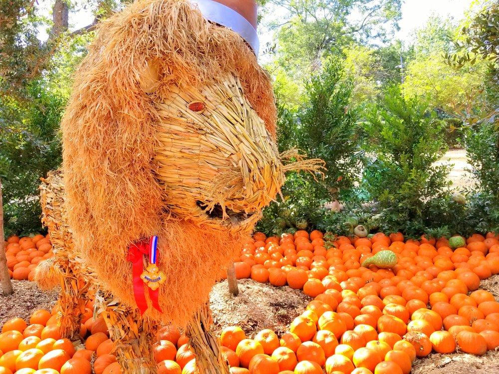 Dallas Arboretum celebrates Autumn with its annual themed pumpkin patch