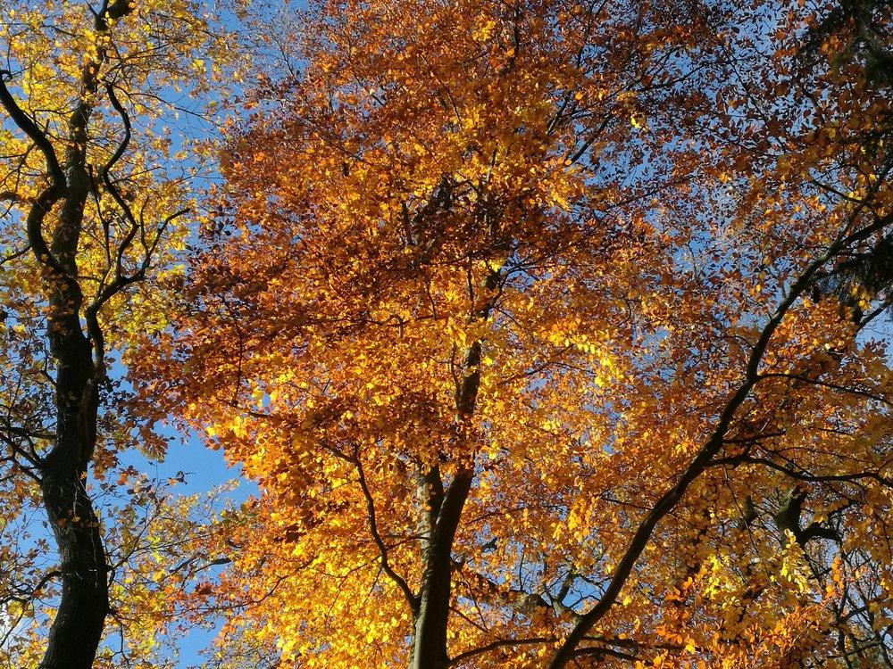 patience composure persistence fall tree Geduld Beharrlichkeit Gelassenheit Herbst Baum