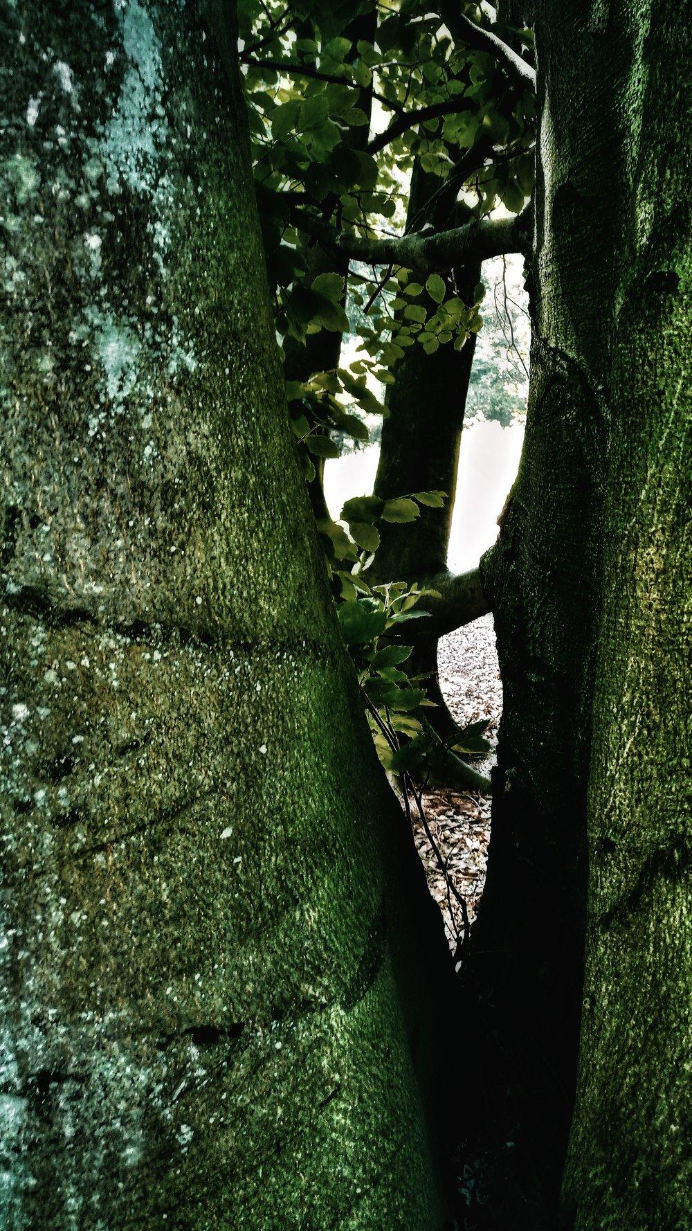 tree Baum stillness silence Ruhe Stille soul Seele green relax Entspannung