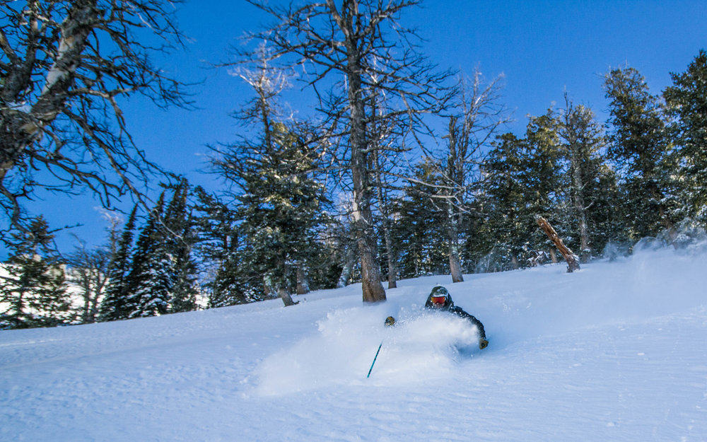 Snowshoe 12-24.jpg