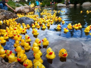 Murphys Duck Races.jpg