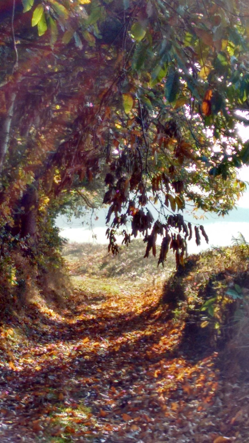 Autumn lane JANE RIPLEY TAAG OPEN.jpg