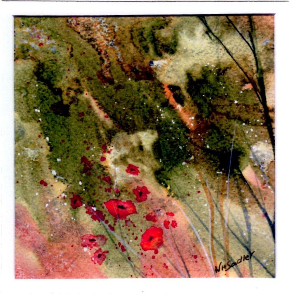 Wild Poppies.jpg