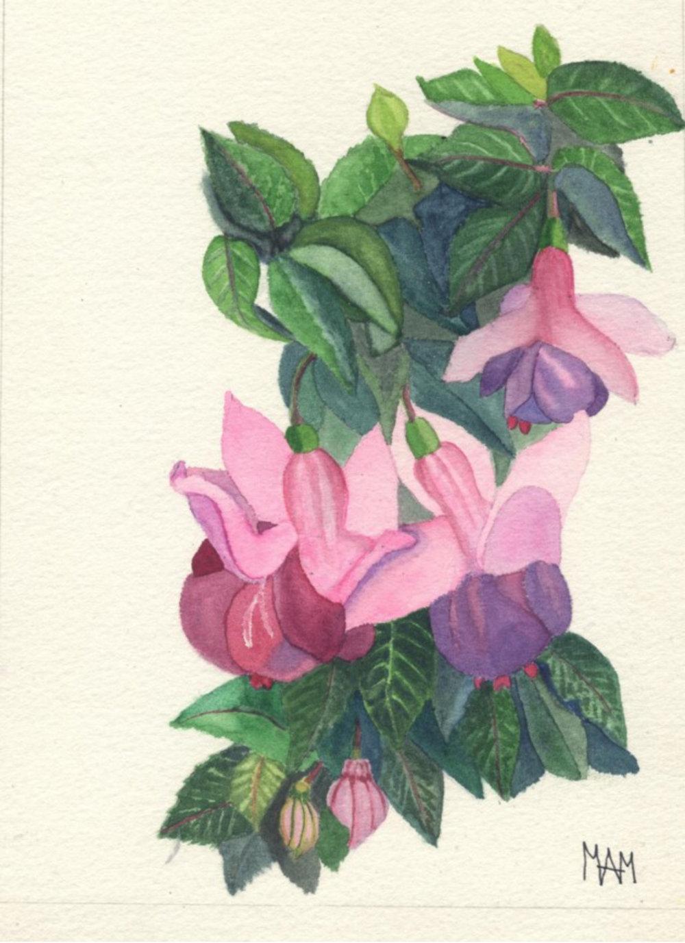 Fuchsia - Mary Moorhouse