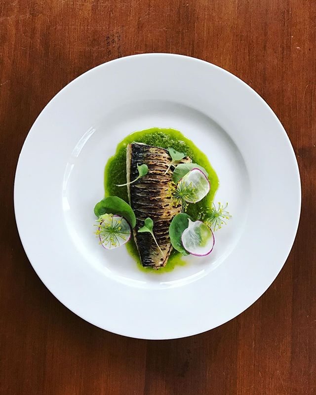 Our Torched Mackerel from Sunday. Radish leaf and lemon thyme emulsion with dill flowers, purple radish and watercress. Finished with a splash of white pine vinegar.
