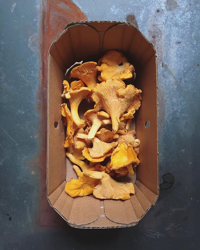 From the forest to the plate. Beautiful wild chanterelles from @forbeswildfoods.