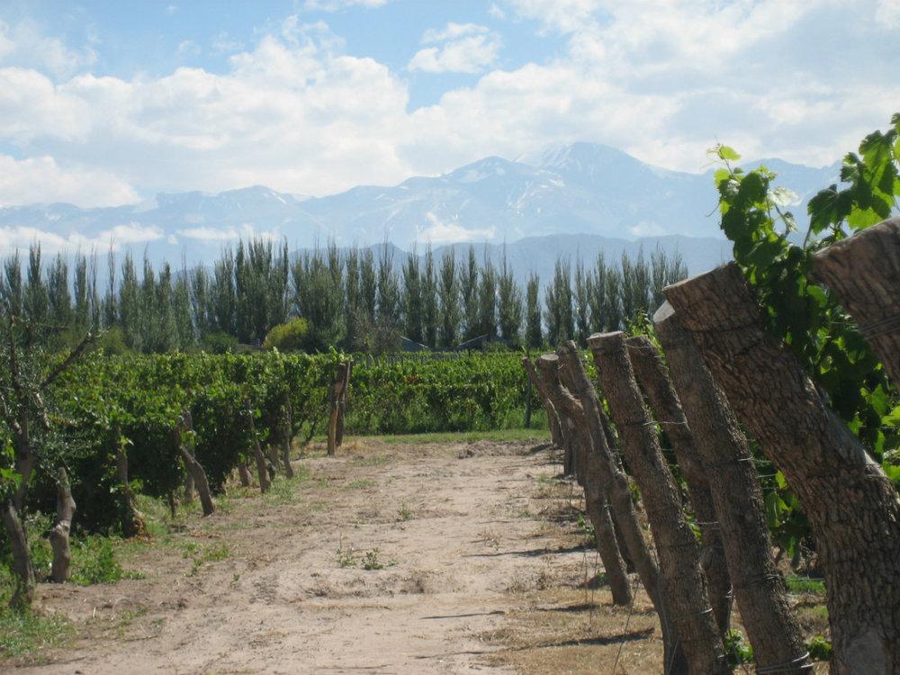wine_Renacer_mendoza.jpg