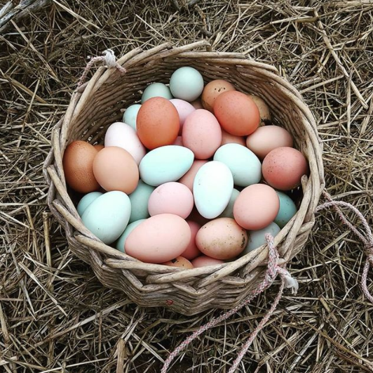 Beautiful chicken eggs available in your CSA box this week!