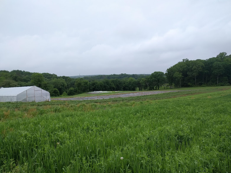 Getting some perspective on this big ol' farm we've gotten ourselves into. From foreground to background: oat and pea cover crop (before winter squash), potatoes, sweet potatoes, carrots, and greens under white row cover off in the back.