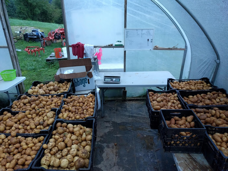 A small portion of our total harvest in our even smaller packshed.
