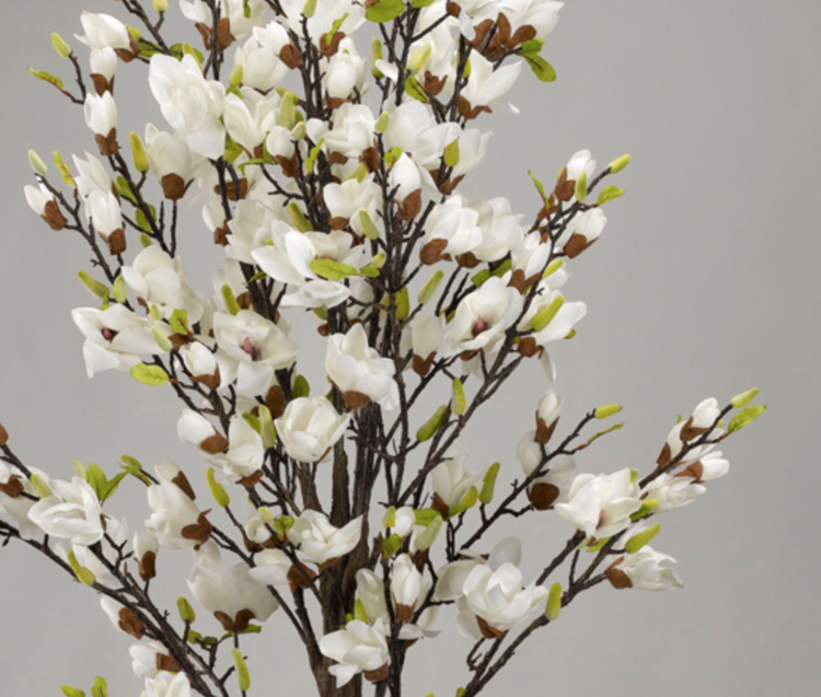 6 White Magnolia Tree Millers Home Furnishings
