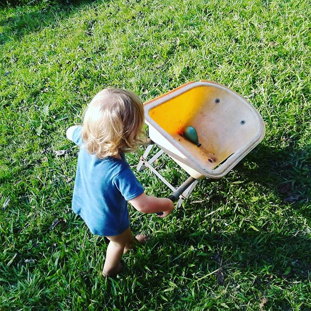 She's getting full power in her body, riding trikes, pushing barrows and climbing on everything she possibly can - What amazing feats we all achieve in those first two years of life! #healthychildren #healthykids #kids #toddler #toddlerlife #play #fun #green #natural #instagood #wheelbarrow #farmergirl #life #today #19months #waterballoons #birthdayparty