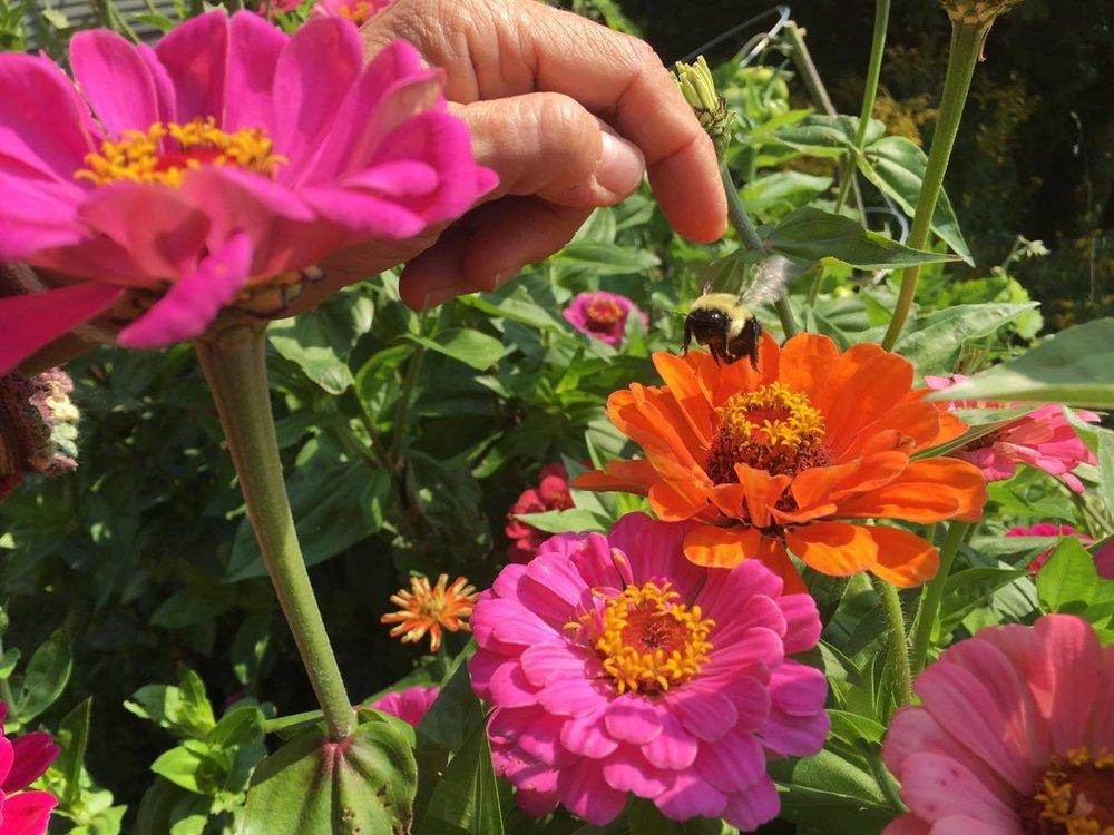 Garden Flowers-10.jpg