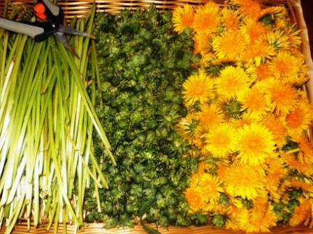 Spring-Dandelion Stems, Buds & Flowers.JPG