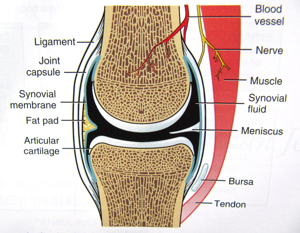 Manual Therapy Aka Manual Joint Mobilization Relieves Pain