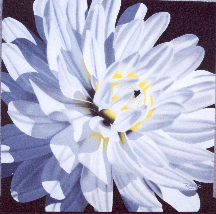 White chrysanthemum mum flowers by robert mumg mightylinksfo