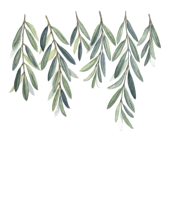 kisspng-olive-branch-watercolor-painting-5a6819390d55a7.4280687815167716410546.png