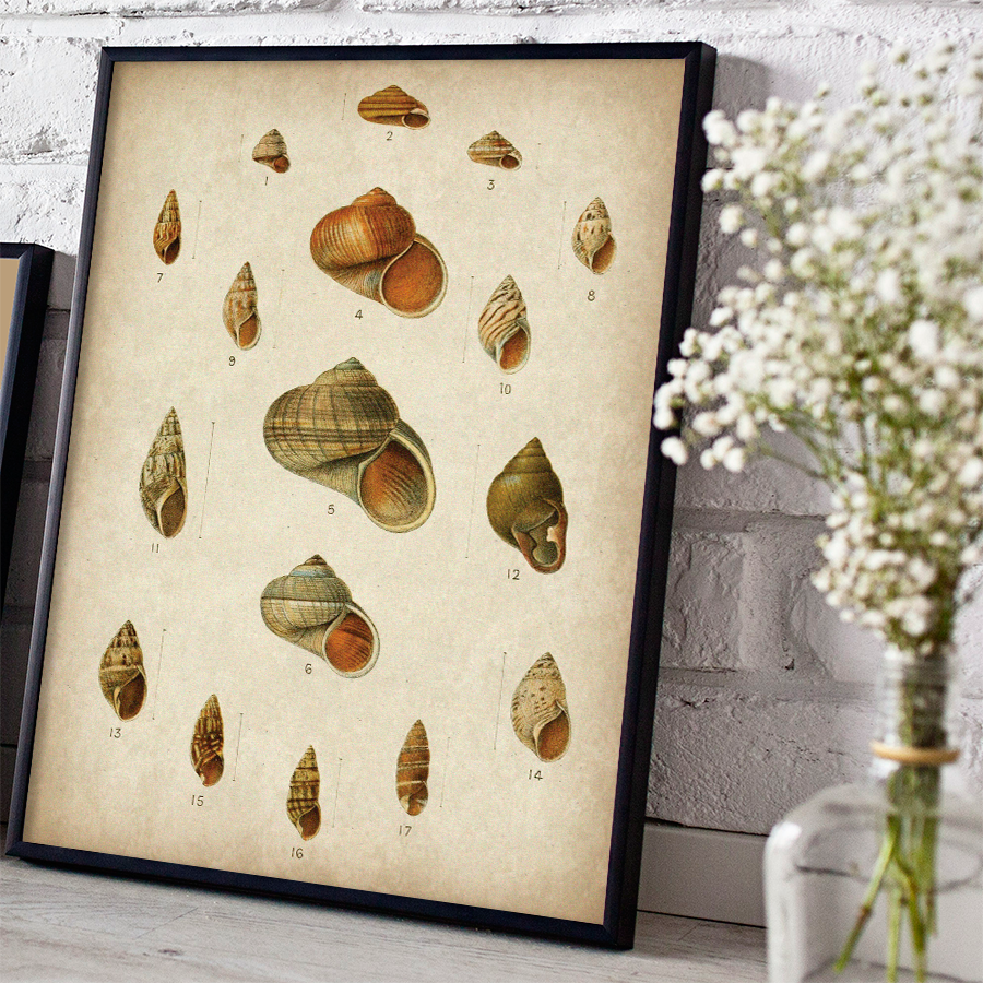 Vintage Shells Digital Print - Free Download  HERE