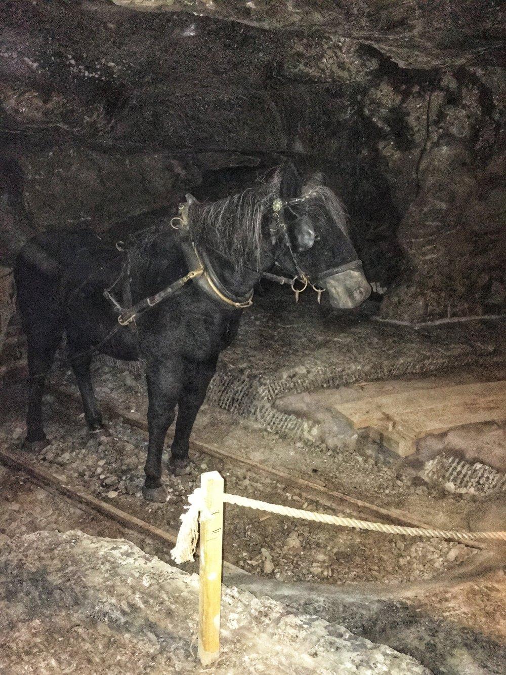 Salt Mine Horse