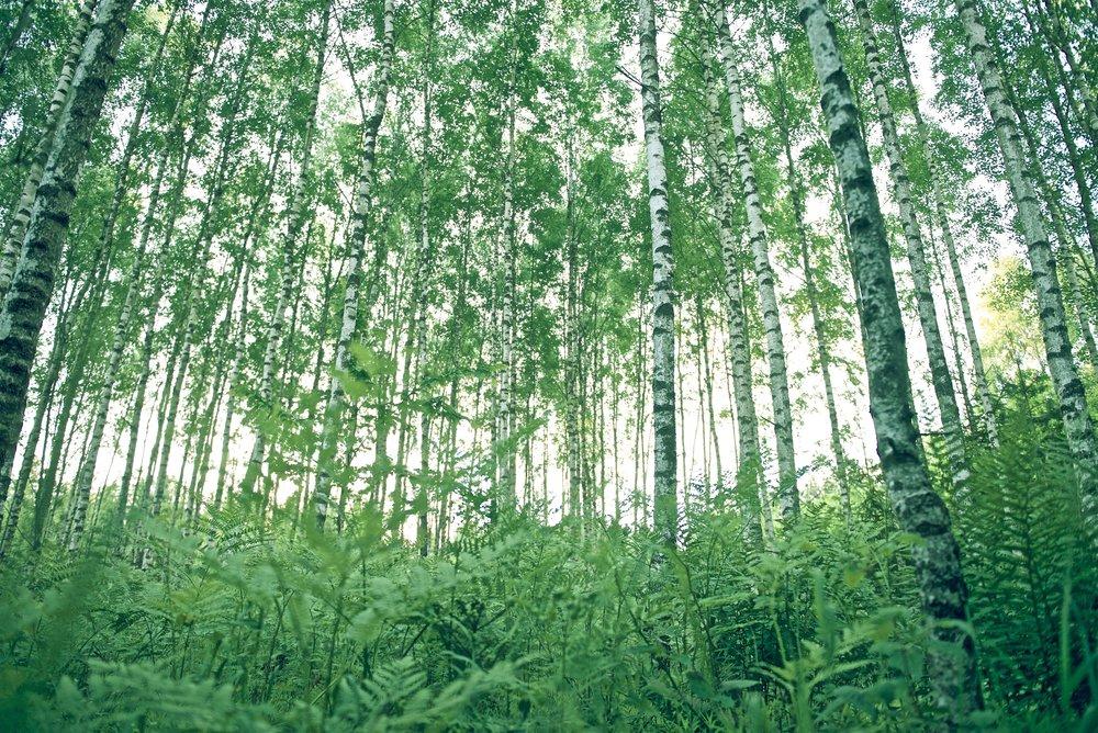 - pakuri nostaa metsäsi arvoa