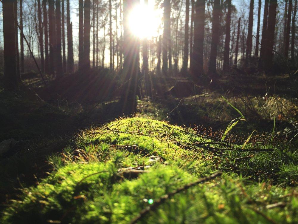 voit aloittaa pakurin kasvatuksen tilamaalla pakuripalvelun tai ymppäystuotteet meiltä - tilaa pakuria metsääsi
