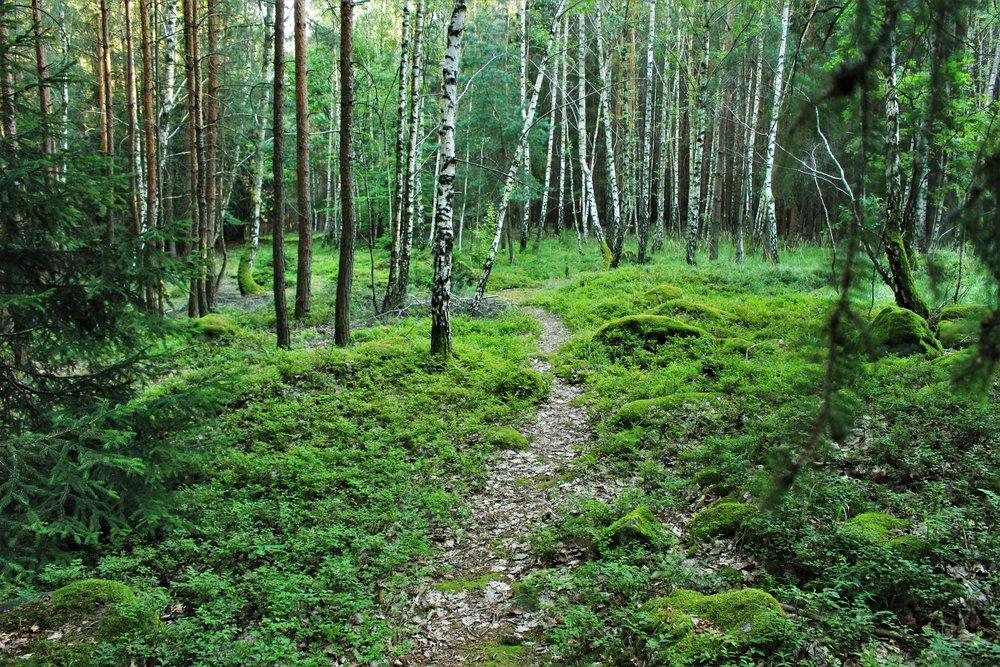AGROMETSÄON - TERVEJAMONIPUOLINENMETSÄ