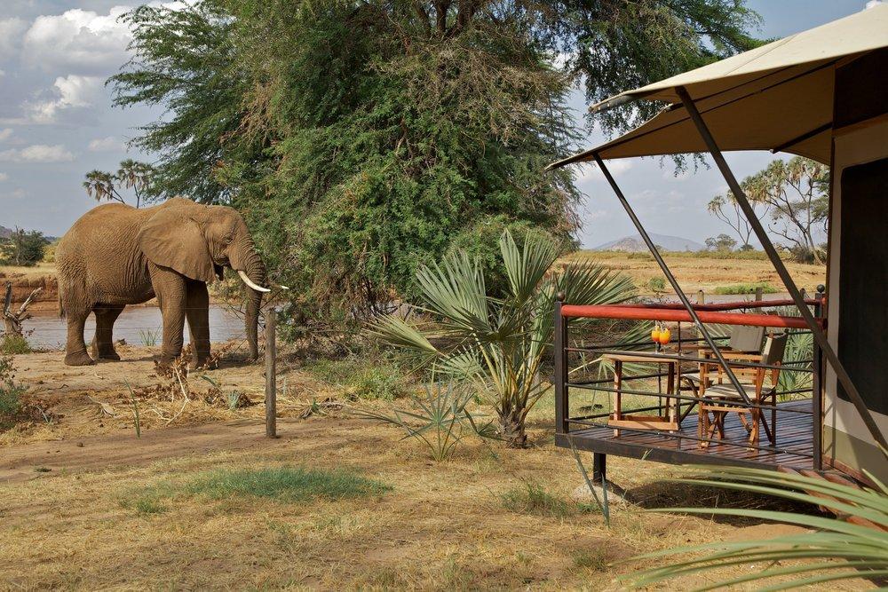 Elefantbesøg ved teltet i Ashnil Samburu Camp.