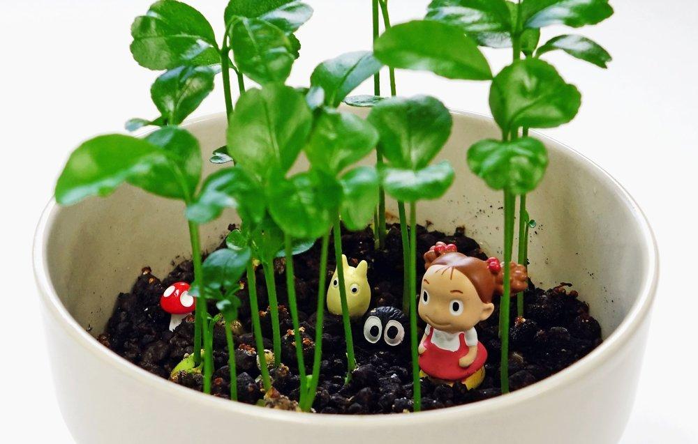 plant-flower-pot-food-green-herb-885423-pxhere.com.jpg
