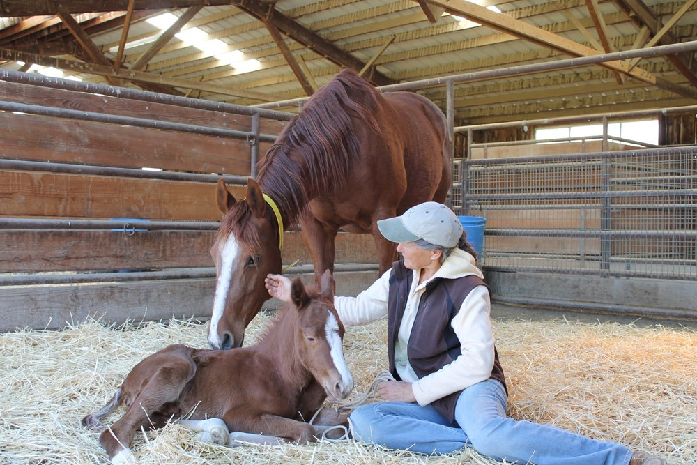 Foals are full-faculty learners from birth, and using techniques that are too aggressive or too ineffective, for instance, can have a life-long impact on that horse´s behavior, or acceptance of humans.