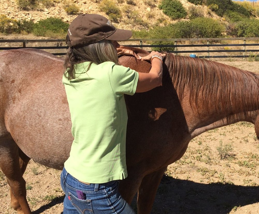 Equine Touch™ transformed this mare from nervous to calm within minutes.