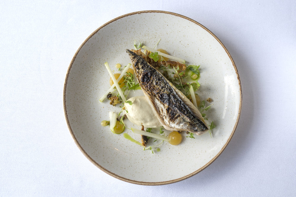 Charred mackerel, celeriac and parmesan bavarois, smoked mackerel jerky and toffeed apple.
