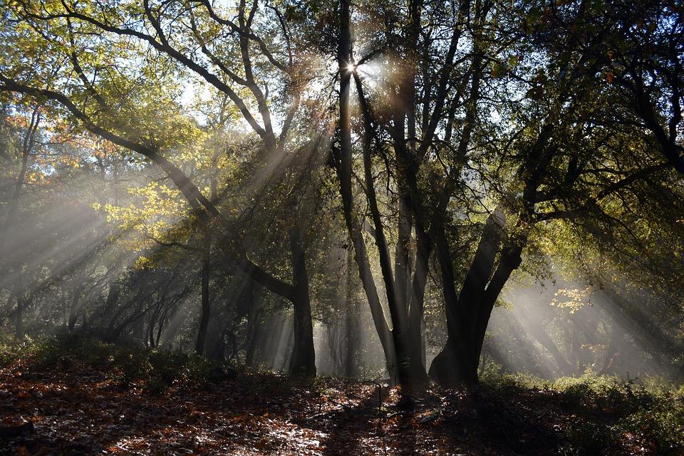 forest-1082254_960_720.jpg