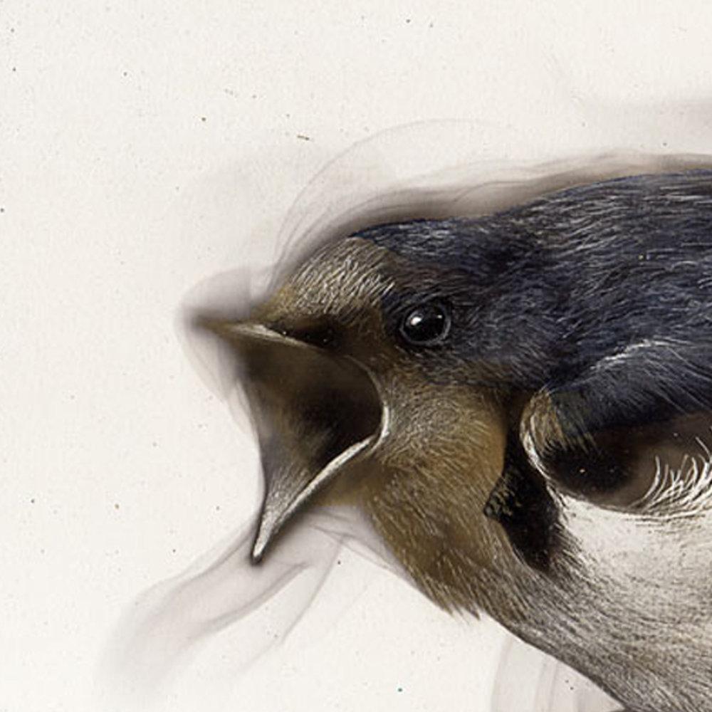 Newbird.jpg