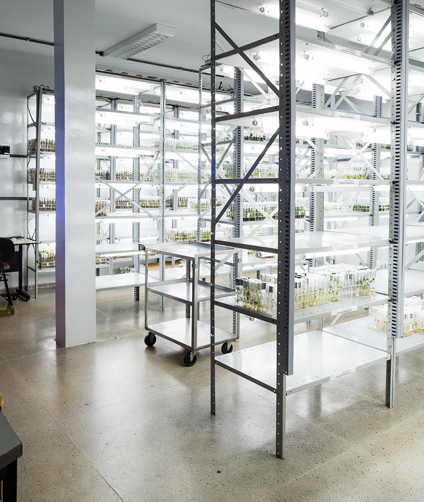 Incubator,EMBRAPA Genetic Resources and Biotechnology    Brasilia, Brazil
