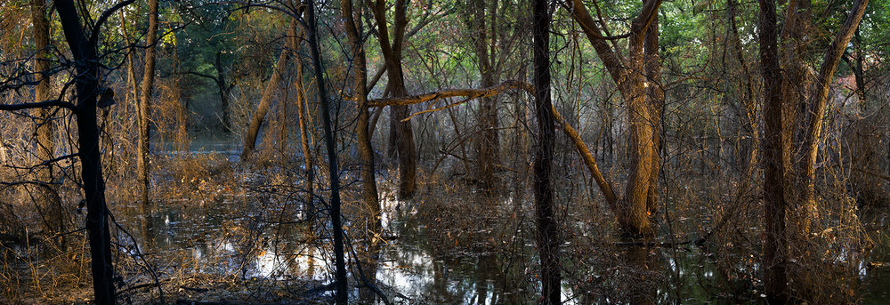 Bottomlands, 2018   Archival Pigment Photograph, 30 x 88 inches