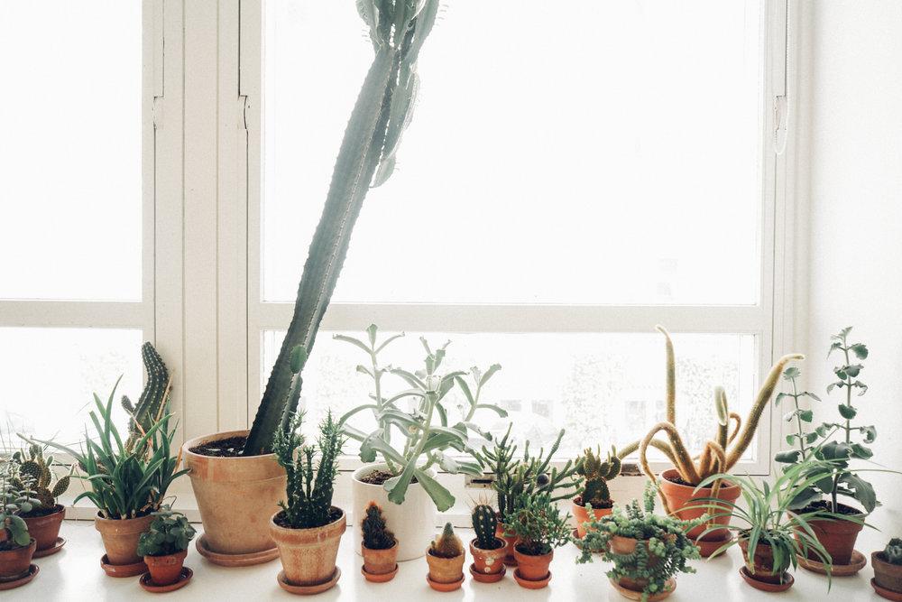 Studio Arhoj plants and cactus